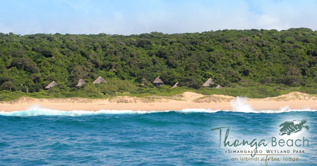 THONGA BEACH LODGE, ELEPHANT COAST